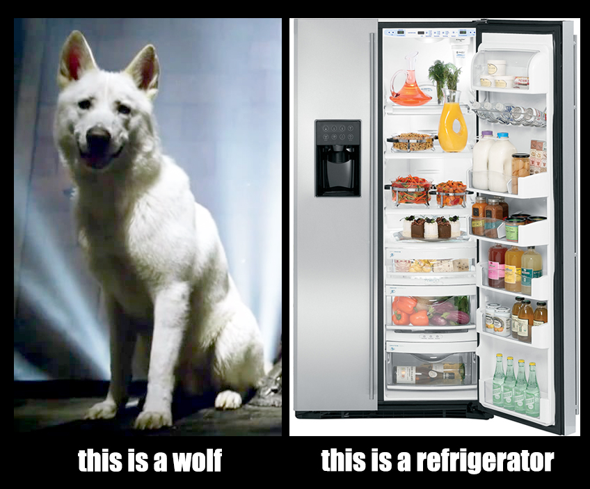 wolfvsfridge